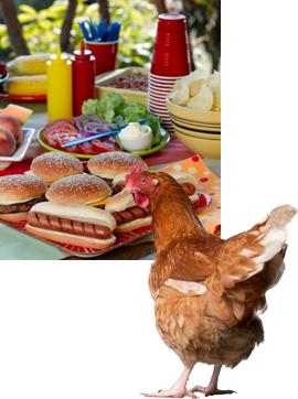 chicken before picnic spread